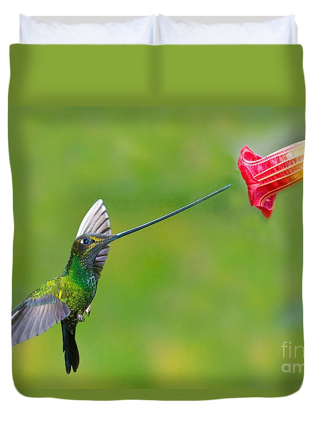 Animal Duvet Cover featuring the photograph Sword-billed Hummingbird by Anthony Mercieca