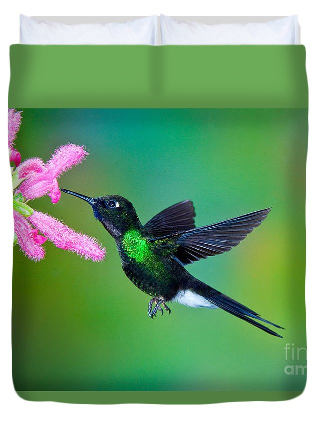 Animal Duvet Cover featuring the photograph Tourmaline Sunangel by Anthony Mercieca