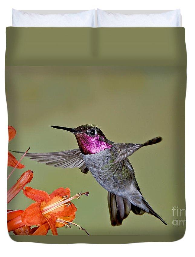 Calypte Anna Duvet Cover featuring the photograph Annas Hummingbird by Anthony Mercieca