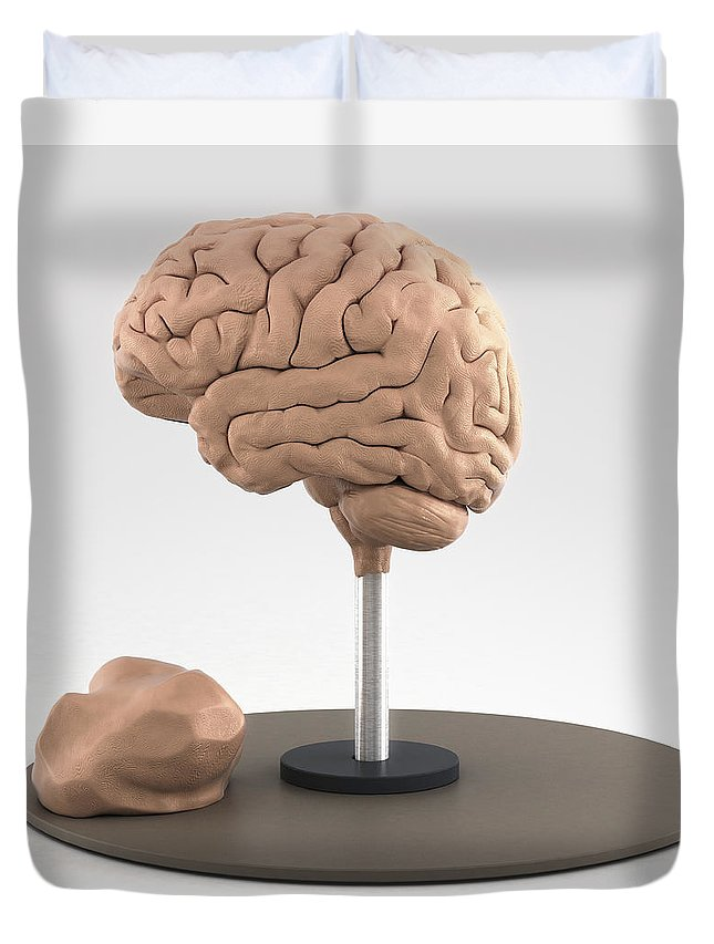 Digital Illustration Duvet Cover featuring the photograph Clay Model Of Brain by Science Picture Co