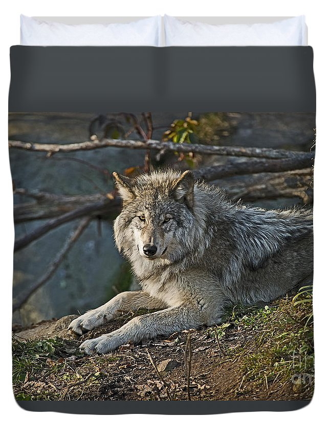 Timber Wolf Photography Duvet Cover featuring the photograph Timber Wolf Pictures by Wolves Only
