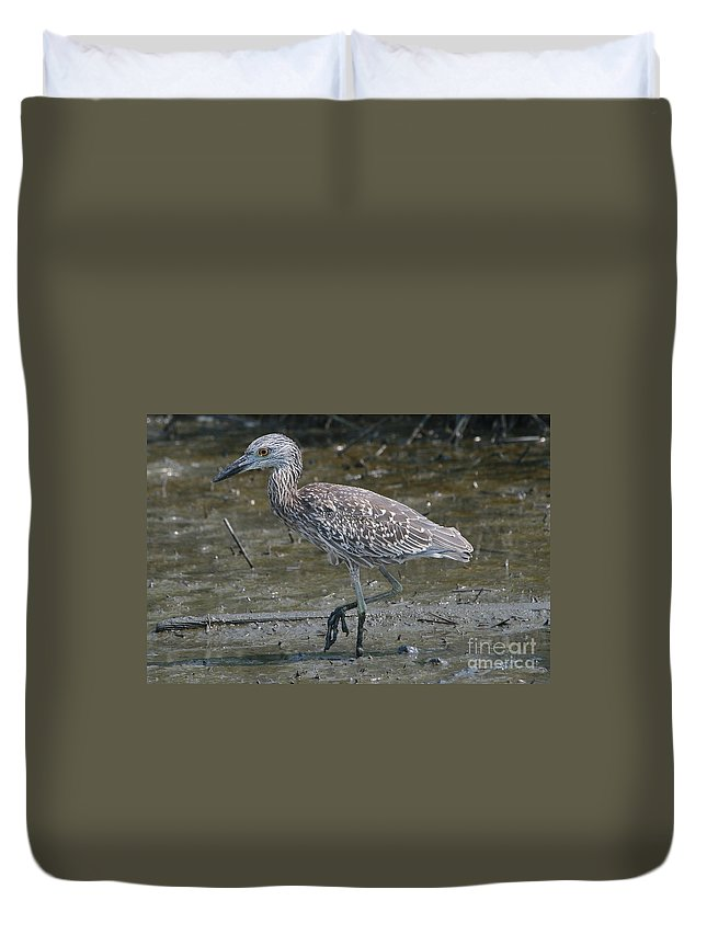 Juvenile Duvet Cover featuring the photograph Yellow -crowned Night Heron by Ken Keener