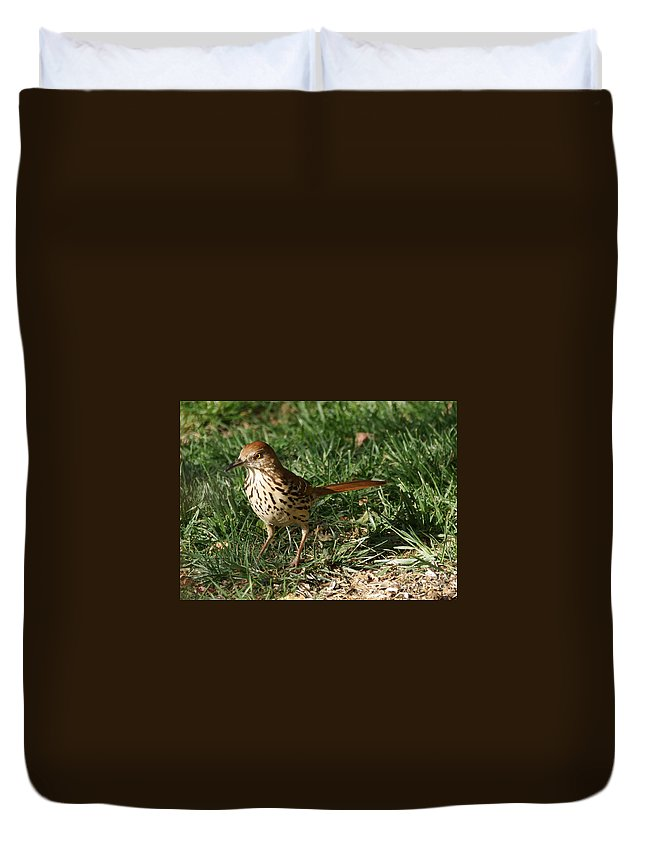 Birds Duvet Cover featuring the photograph Brown Thrasher by Lori Tordsen