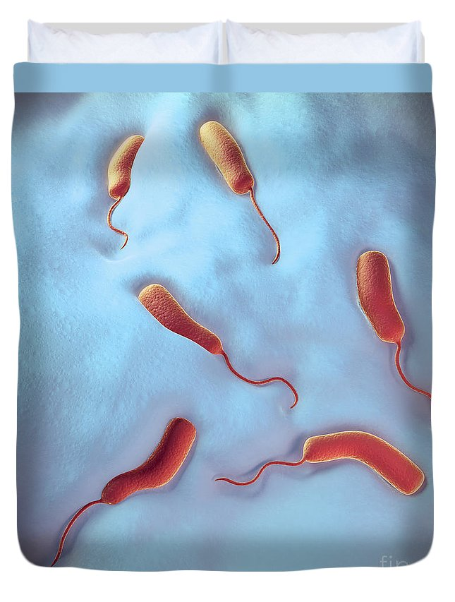 Bacterium Duvet Cover featuring the photograph Cholera Bacteria by Science Picture Co