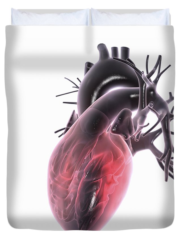 Right Ventricle Duvet Cover featuring the photograph Heart Anatomy by Science Picture Co