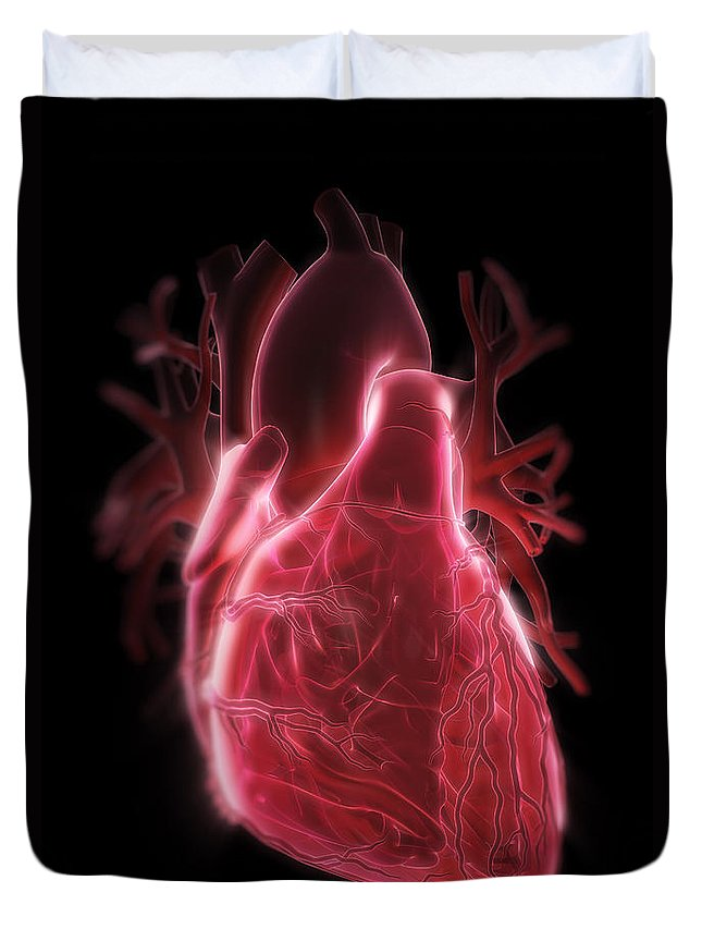 Internal Organ Duvet Cover featuring the photograph Human Heart by Science Picture Co