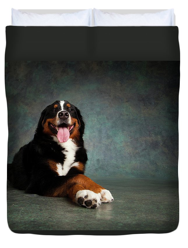 Photography Duvet Cover featuring the photograph Portrait Of Bernese Mountain Dog by Animal Images