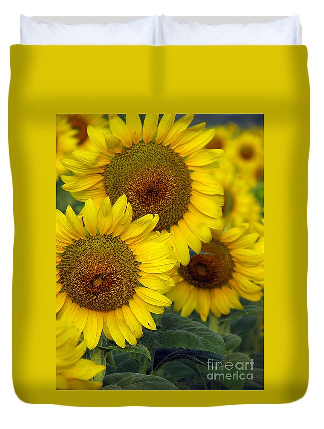 Sunflowers Duvet Cover featuring the photograph Sunflower Series by Amanda Barcon
