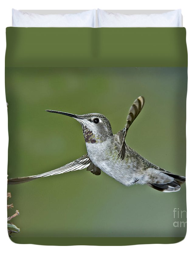 Calypte Anna Duvet Cover featuring the photograph Annas Hummingbird by Anthony Mercieca