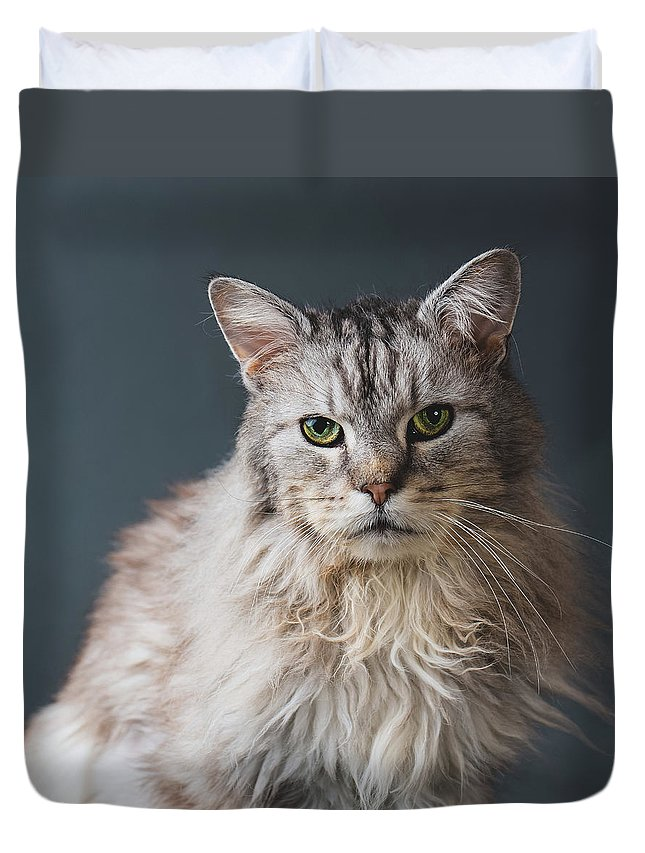 Pets Duvet Cover featuring the photograph Fortunate Tails by Matt Porteous