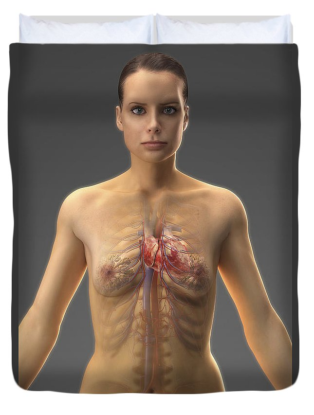 Iliac Artery Duvet Cover featuring the photograph The Cardiovascular System Female by Science Picture Co