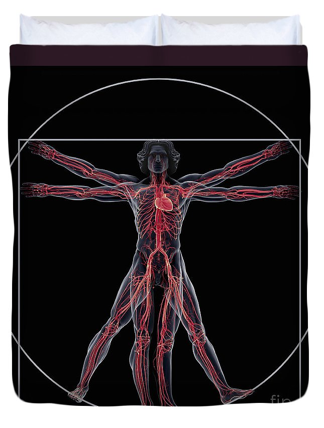 Transparency Duvet Cover featuring the photograph Vitruvian Man by Science Picture Co