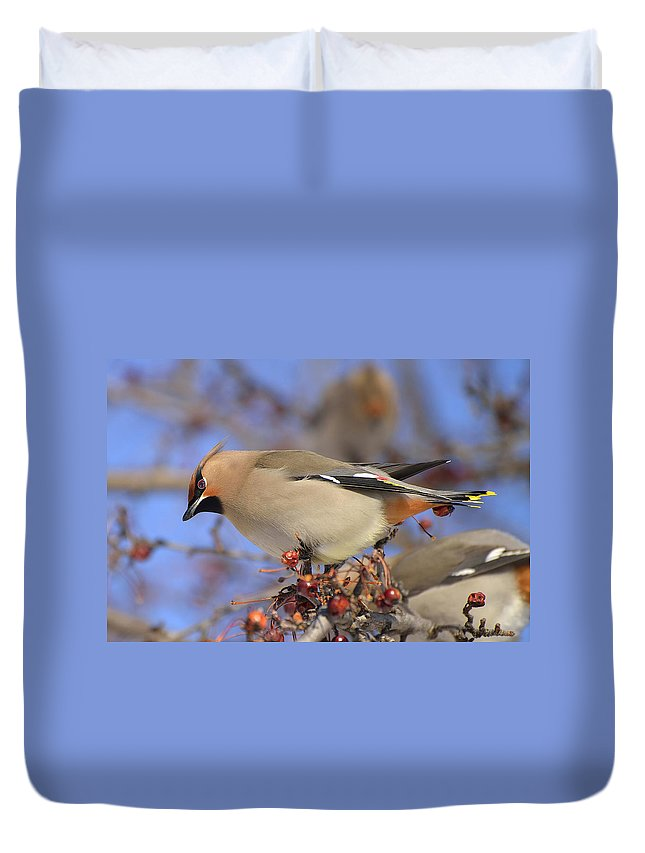 Waxwing Duvet Cover featuring the photograph A Bohemian Experience by Joshua McCullough