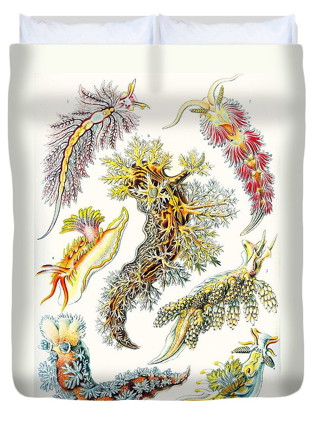 Vertical Duvet Cover featuring the drawing A Collection Of Nudibranchia by Ernst Haeckel