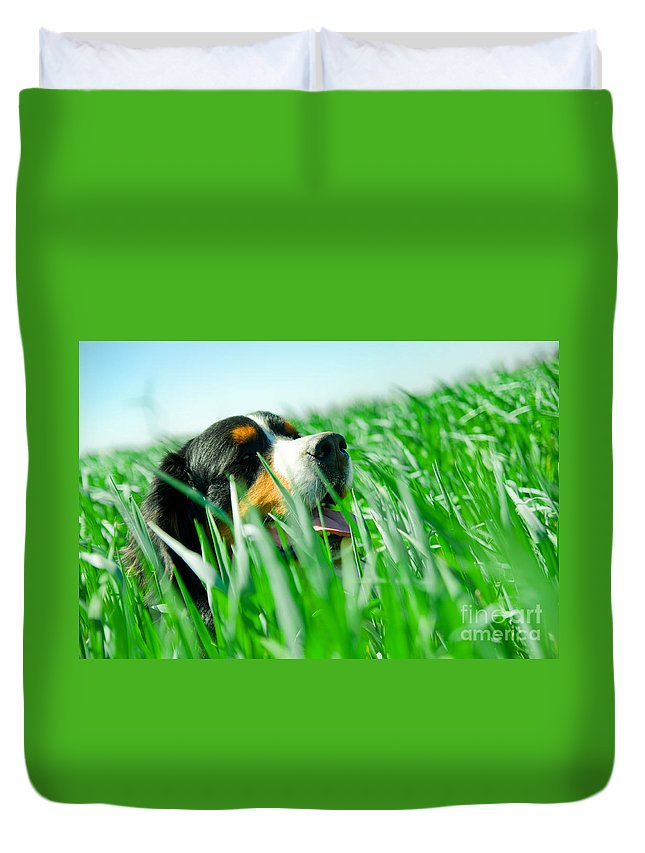 Adorable Duvet Cover featuring the photograph A Cute Dog In The Grass by Michal Bednarek