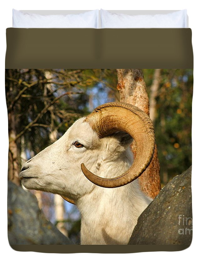 Sheep Duvet Cover featuring the photograph A Dall by Rick Monyahan