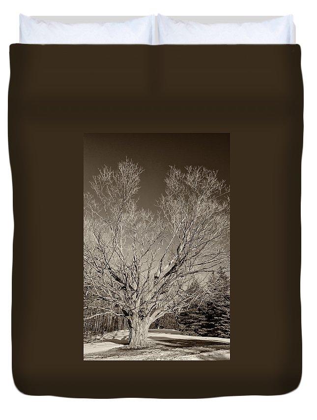 Steve Harrington Duvet Cover featuring the photograph A Giant Sleeps Sepia by Steve Harrington