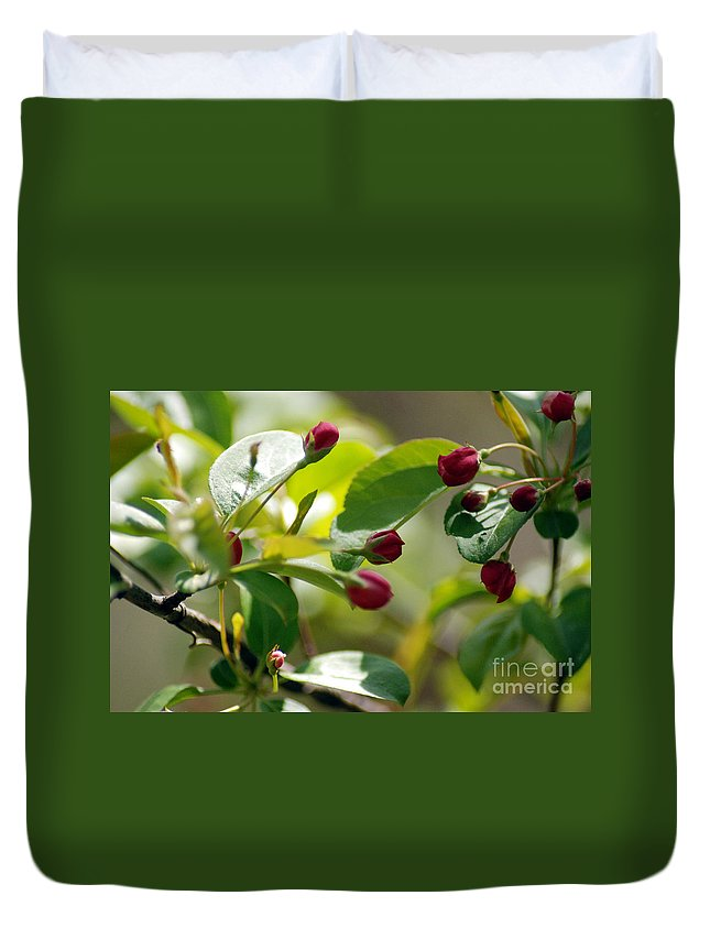 Red Flowers Duvet Cover featuring the photograph A Group Of Red Tree Flowers by Optical Playground By MP Ray