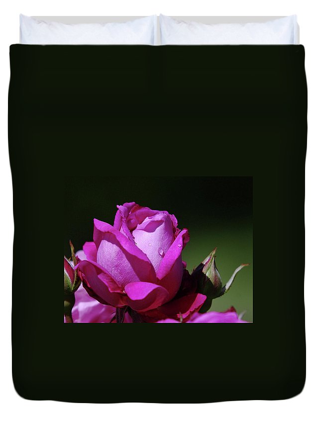 Blue Rose Duvet Cover featuring the photograph A Light Blue Rose by Jeff Swan