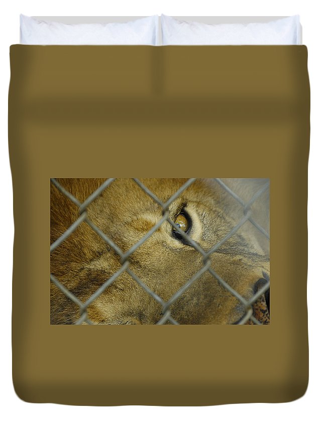 Lion Duvet Cover featuring the photograph A Lions Eye by Charles Beeler
