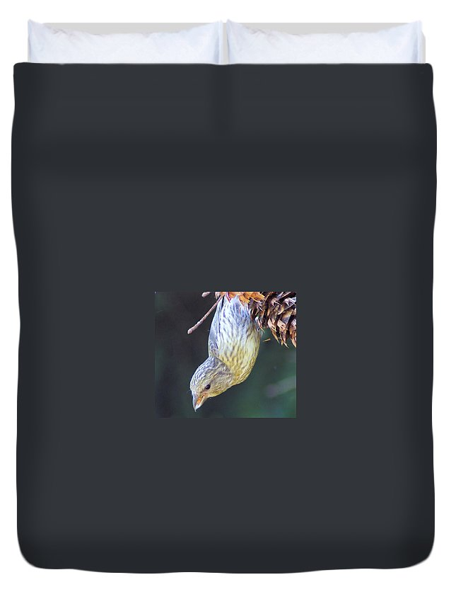 Fowl Duvet Cover featuring the photograph A Little Bird Eating Pine Cone Seeds by Jeff Swan