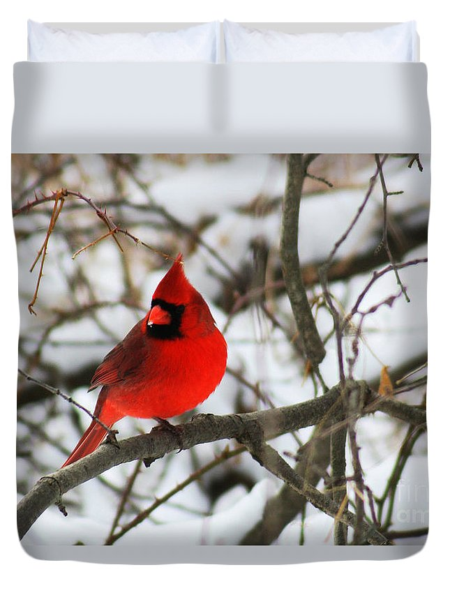 Alyce Taylor Duvet Cover featuring the photograph A Little Bit Of Colour by Alyce Taylor