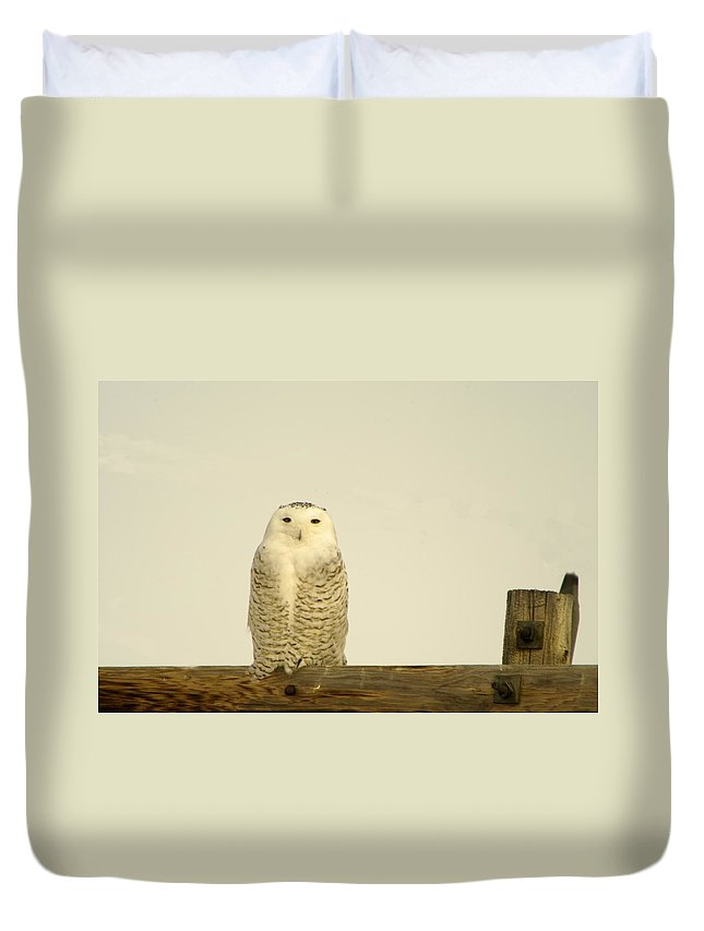 Birds Duvet Cover featuring the photograph A Lone Artic Owl by Jeff Swan