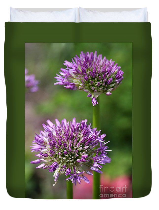 Allium Duvet Cover featuring the photograph A New Beginning by Christiane Schulze Art And Photography