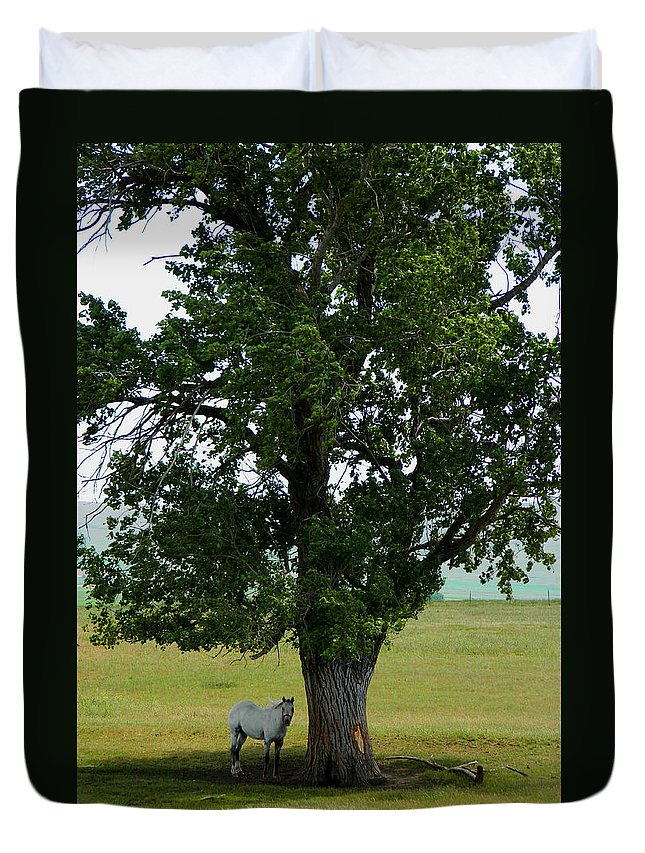 Horse Duvet Cover featuring the photograph A One Horse Tree And Its Horse by Jacqueline DiAnne Wasson