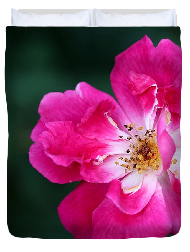 Macro Duvet Cover featuring the photograph A Pretty Pink Rose by Sabrina L Ryan