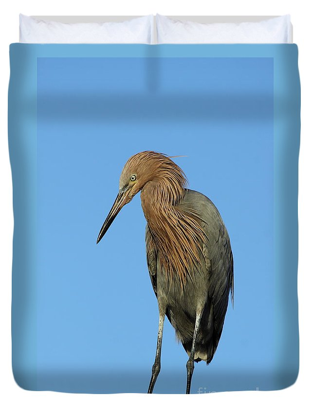 Reddish Egret Duvet Cover featuring the photograph A Redhead On A Roof by Christiane Schulze Art And Photography