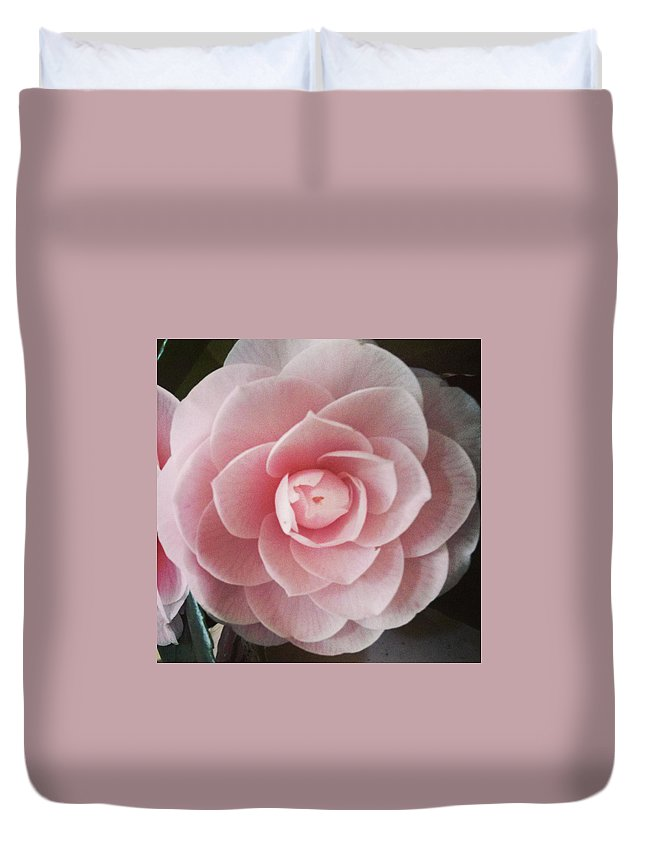 Rose Duvet Cover featuring the photograph A Rose Is A Rose Is A Rose by Michael Merry