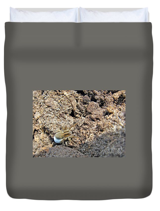 Nature Duvet Cover featuring the photograph A Spider With The Egg Sack by Ausra Huntington nee Paulauskaite