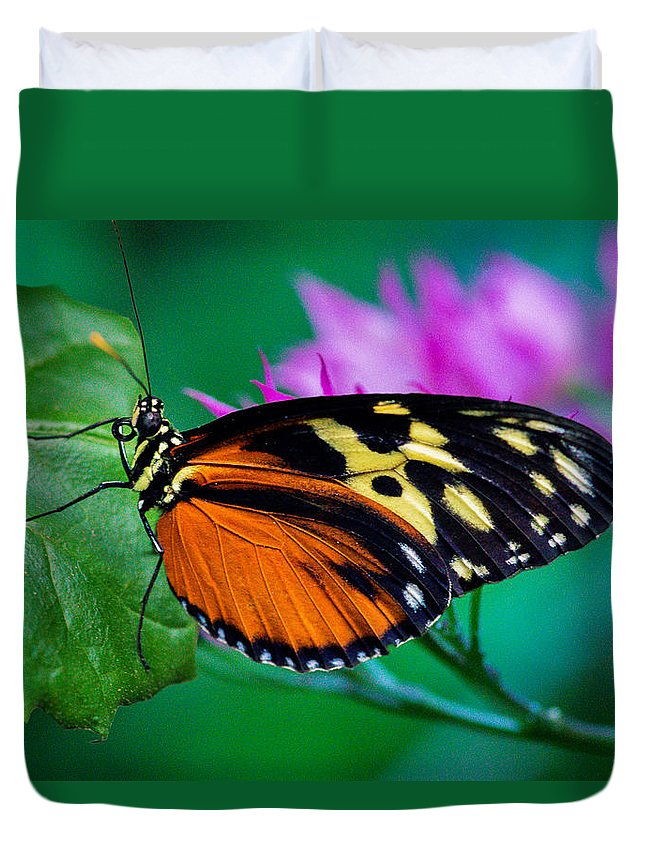 Butterfly Duvet Cover featuring the photograph A Splash Of Colour by Garvin Hunter