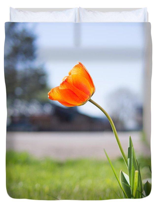 Spring Sunshine Sun Orange Bokeh Tree Grass Green Urban Tulip Flower Bloom Grow Duvet Cover featuring the photograph A Spring Tulip by Aaron Aldrich