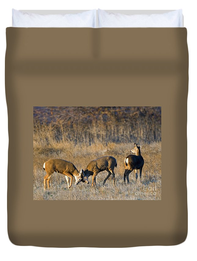 Deer Duvet Cover featuring the photograph A Test Of Will by Mike Dawson