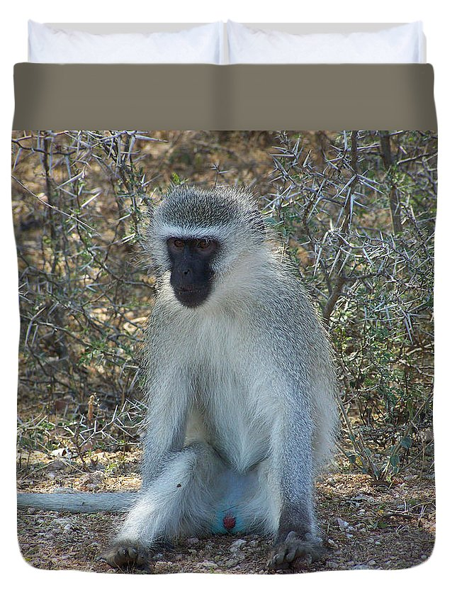Vervet Monkey Duvet Cover featuring the photograph A Time To Relax by Douglas Barnard