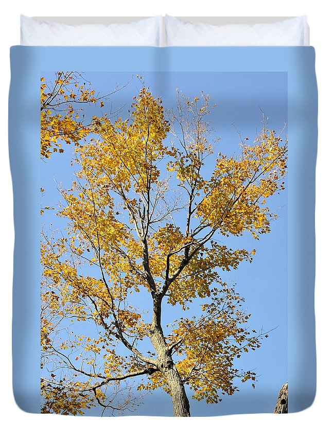 Maple Duvet Cover featuring the photograph A Touch Of Gold by Valerie Kirkwood