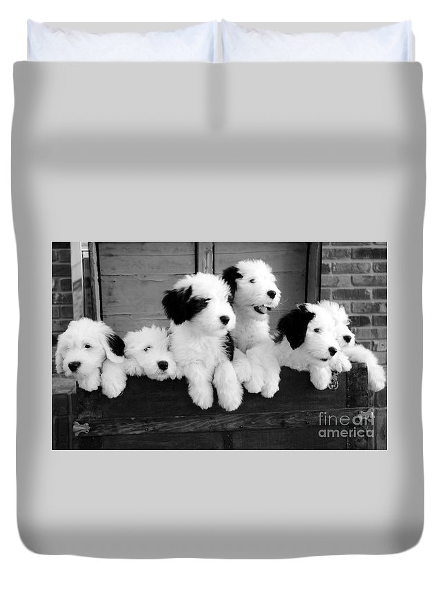 #old #english Duvet Cover featuring the photograph A Trunk Full by Kathleen Struckle