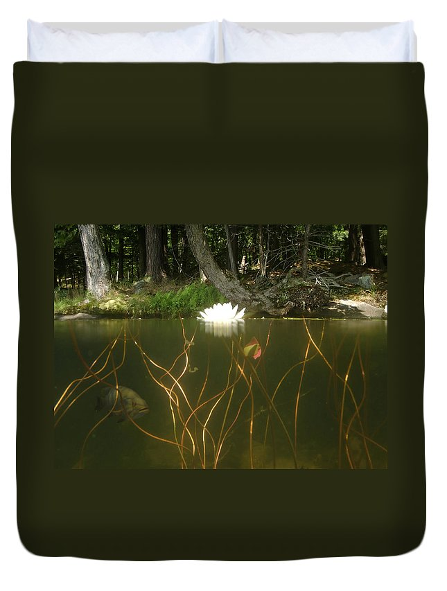Lily Pad Duvet Cover featuring the photograph Above And Below by Mark Janeck
