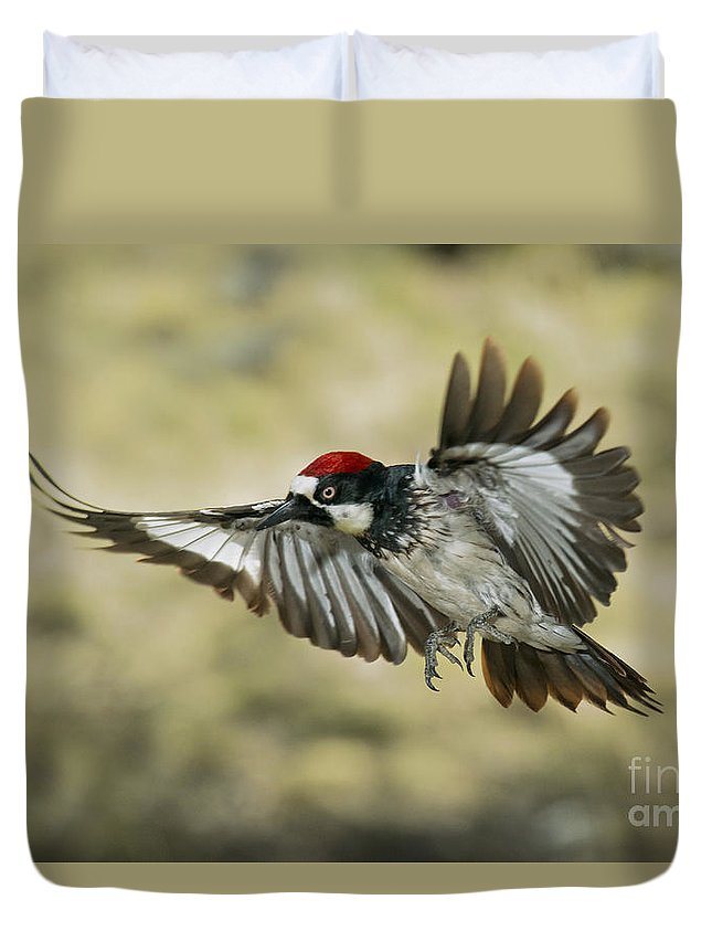 Acorn Woodpecker Duvet Cover featuring the photograph Acorn Woodpecker by Anthony Mercieca