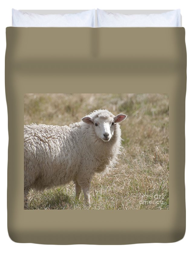 Adorable Sheep In New Zealand Duvet Cover featuring the photograph Adorable Sheep by Loriannah Hespe