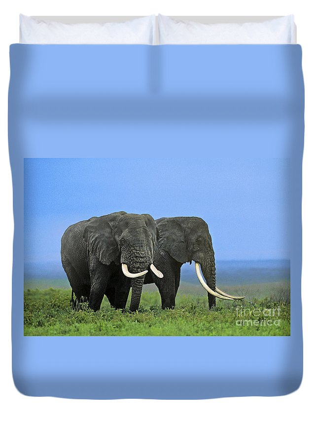 Africa Duvet Cover featuring the photograph African Bull Elephants In Rain Endangered Species Tanzania by Dave Welling