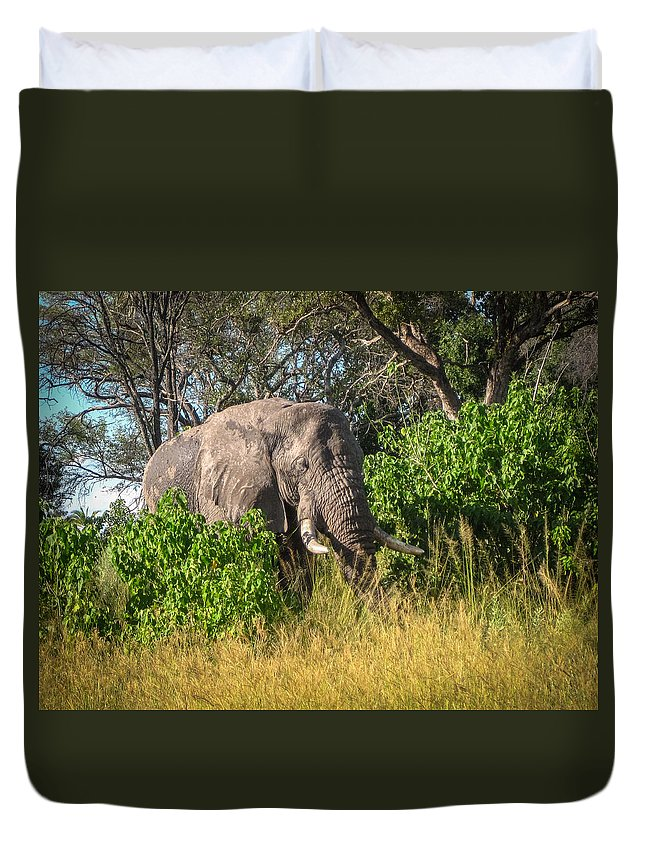 Botswana Duvet Cover featuring the photograph African Bush Elephant by Gregory Daley MPSA