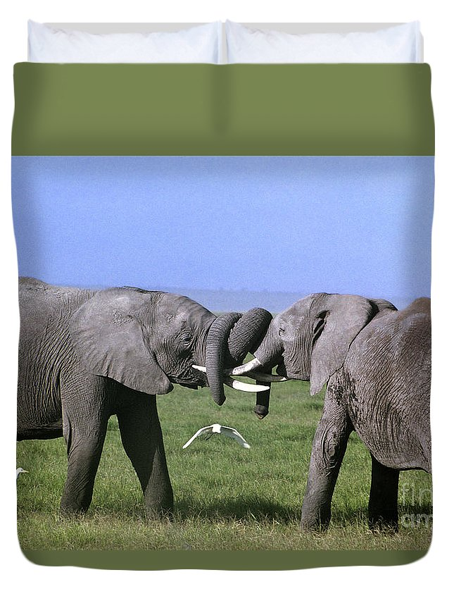 Africa Duvet Cover featuring the photograph African Elephant Greeting Endangered Species Tanzania by Dave Welling