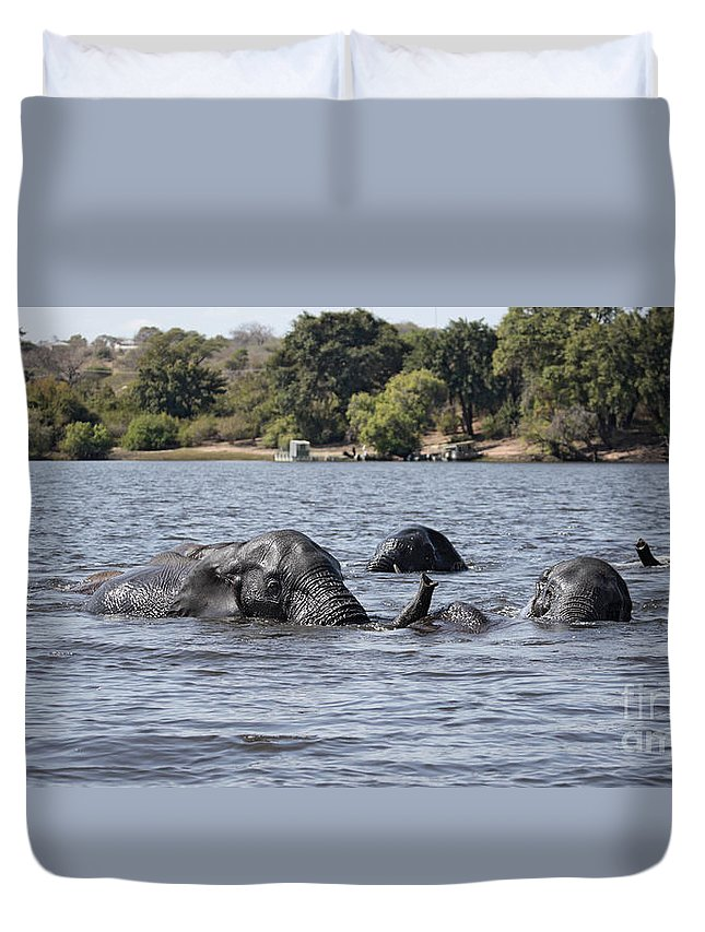 African Elephants Duvet Cover featuring the photograph African Elephants Swimming In The Chobe River by Liz Leyden