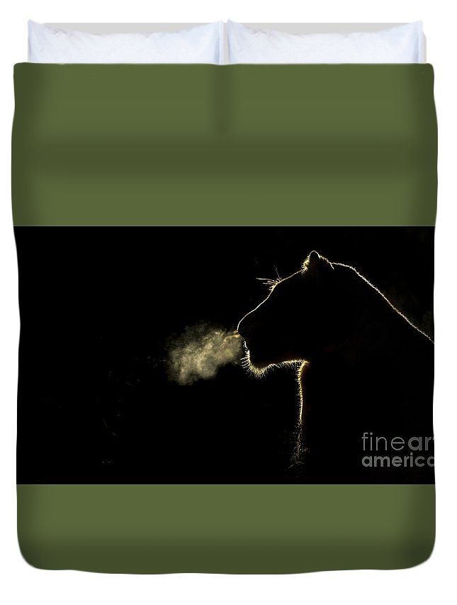Nis Duvet Cover featuring the photograph African Lioness Breath Sabi Sands South by Brendon Cremer