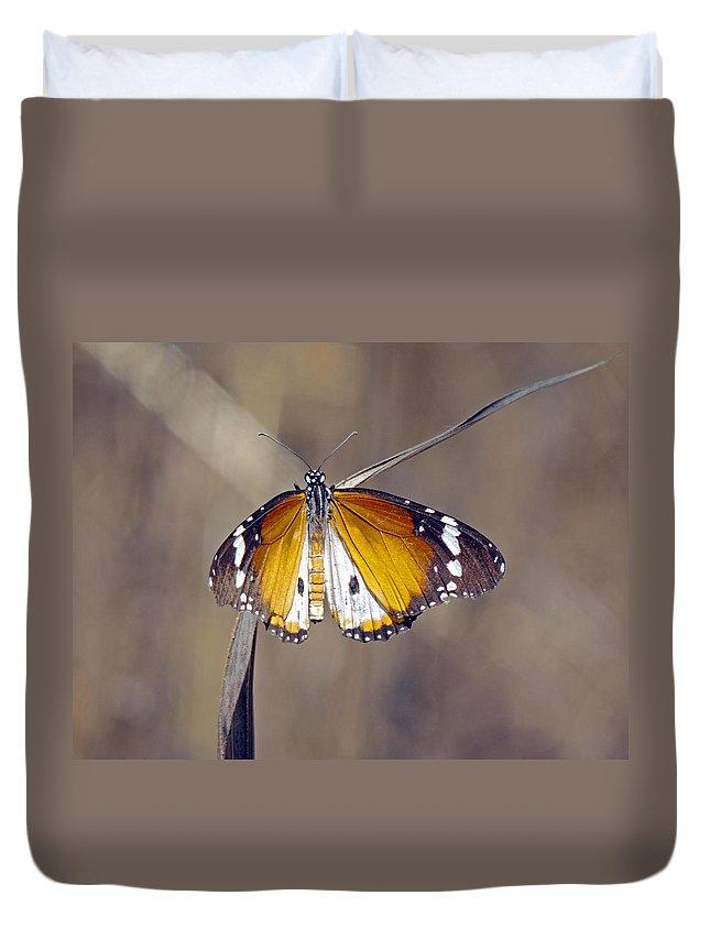 African Monarch Butterfly Duvet Cover featuring the photograph African Monarch Butterfly by Tony Murtagh