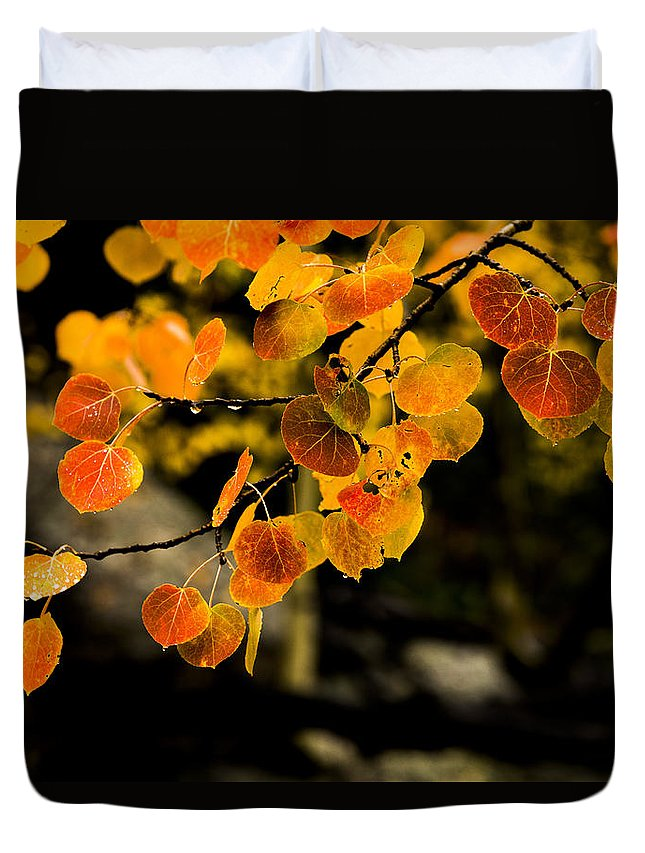 Fall Duvet Cover featuring the photograph After Rain by Chad Dutson