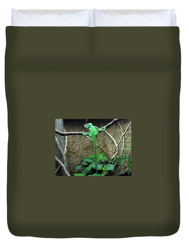 Lizards Duvet Cover featuring the photograph Afternoon Workout by Lingfai Leung